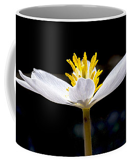 Bloodroot 1 Coffee Mug