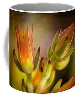 Blooming Succulents Iv Coffee Mug