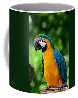 Blue And Yellow Gold Macaw Parrot Coffee Mug
