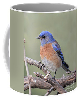 Coffee Mug featuring the photograph Blue Bird At Sedona by Debbie Hart