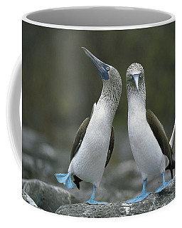 Blue Footed Booby Dancing Coffee Mug