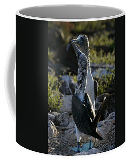 Blue-footed Booby, Sula Nebouxii Coffee Mug