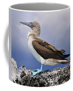 Blue-footed Booby Coffee Mug