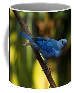 Blue Grey Tanager Coffee Mug
