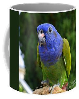 Blue Headed Pionus Parrot Coffee Mug