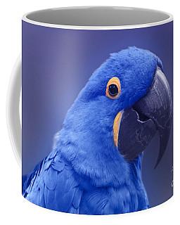 Blue Hyacinth Macaw - Anodorhynchus Hyacinthinus - Puohokamoa Hoolawa Maui Hawaii  Coffee Mug