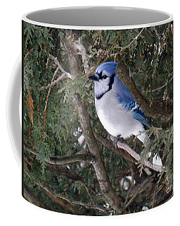 Coffee Mug featuring the photograph Blue Jay In The Cedars by Brenda Brown