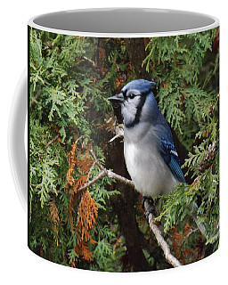 Coffee Mug featuring the photograph Blue Jay In Cedar Tree 2 by Brenda Brown