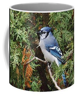Coffee Mug featuring the photograph Blue Jay In Cedar Tree by Brenda Brown