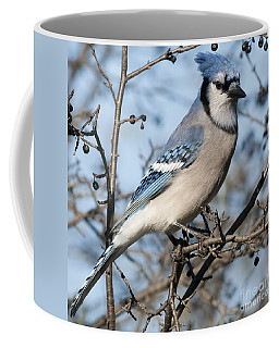 Blue Jay.. Coffee Mug by Nina Stavlund