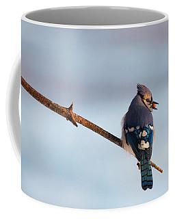 Blue Jay With Nuts Coffee Mug