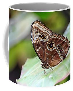 Coffee Mug featuring the photograph Blue Morpho Butterfly by Teresa Zieba