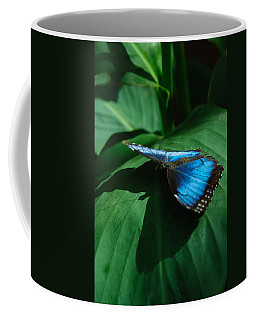 Coffee Mug featuring the photograph Blue Morpho by Tam Ryan