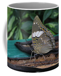 Blue-spotted Charaxes Butterfly Coffee Mug