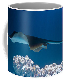 Coffee Mug featuring the photograph Blue Spotted Fantail Ray by Eti Reid