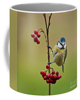 Coffee Mug featuring the photograph Blue Tit With Hawthorn Berries by Liz Leyden