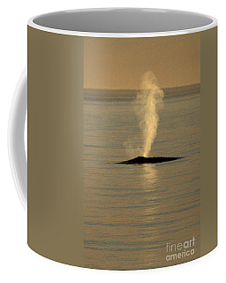 Coffee Mug featuring the photograph Blue Whale At Sunset In Monterey Bay California  2013 by California Views Mr Pat Hathaway Archives