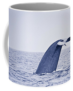 Coffee Mug featuring the photograph Blue Whale Tail Fluke With Remoras by Liz Leyden