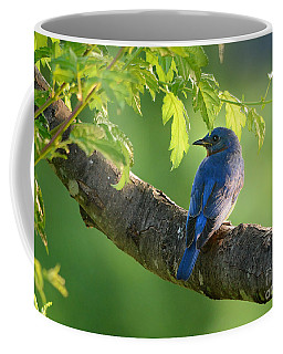 Bluebird In The Morning Coffee Mug