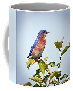 Coffee Mug featuring the photograph Bluebird On Top by Kerri Farley