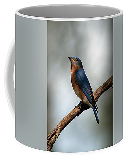 Bluebird -why Yes Coffee Mug