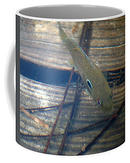 Bluegill On The Hunt Coffee Mug