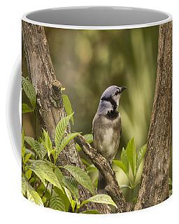 Bluejay In Fork Of Tree Coffee Mug by Anne Rodkin