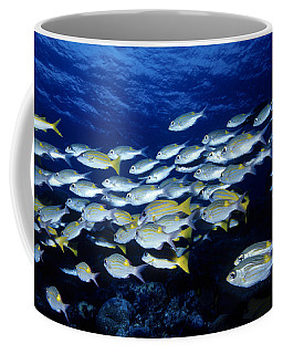 Bluelined Snappers And Yellowspot Emperors Coffee Mug