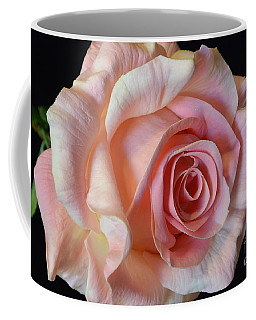 Coffee Mug featuring the photograph Blushing Pink Rose by Jeannie Rhode