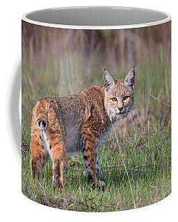 Bobcat Glance Coffee Mug