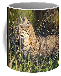 Coffee Mug featuring the photograph Bobcat In The Grass by Beth Sargent