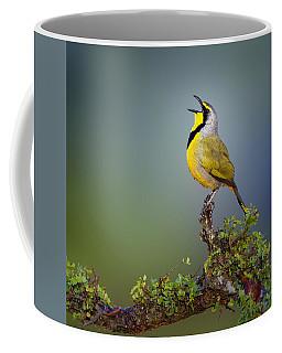 Bokmakierie Bird - Telophorus Zeylonus Coffee Mug