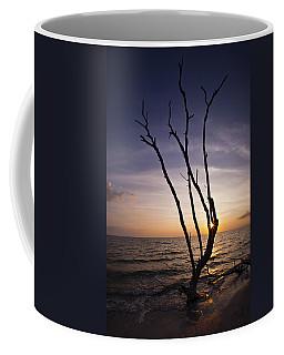 Coffee Mug featuring the photograph Bonita Beach Tree by Bradley R Youngberg