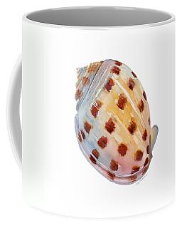 Bonnet Shell Coffee Mug