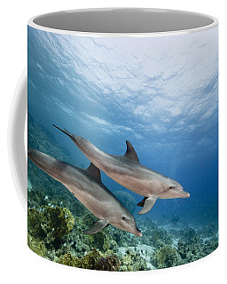 Bottlenose Dolphins Swimming Over Reef Coffee Mug