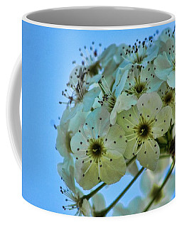 Bradford Pear I Coffee Mug