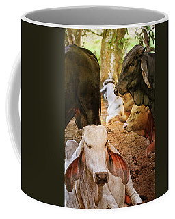 Coffee Mug featuring the photograph Brahman Cattle Vertical by Peggy Collins