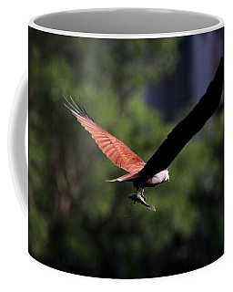 Brahminy Kite With Catch  Coffee Mug