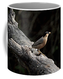 Brahminy Starling Coffee Mug