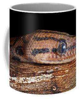 Brazilian Rainbow Boa Epicrates Cenchria Coffee Mug