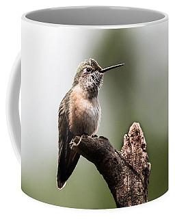 Broad-tailed Hummingbird Sit  Coffee Mug