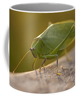 Broad-winged Katydid Coffee Mug