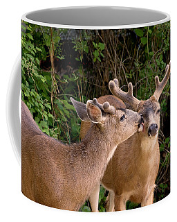 Coffee Mug featuring the photograph Brotherly Love Deer Bucks by Peggy Collins