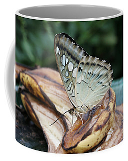 Brown Clipper Butterfly #3 Coffee Mug