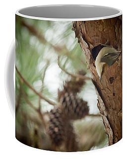 Brown Headed Nuthatch Coffee Mug by Linda Unger