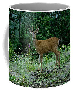 Coffee Mug featuring the photograph Buck by Rod Wiens