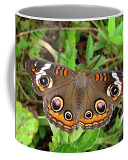 Buckeye Butterfly Coffee Mug by Donna Brown