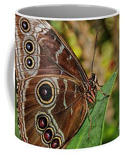 Coffee Mug featuring the photograph Blue Morpho Butterfly by Olga Hamilton