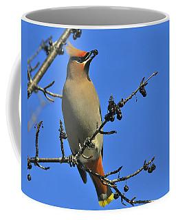 Buckthorn Breakfast Coffee Mug