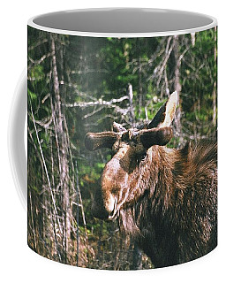 Coffee Mug featuring the photograph Bull Moose In Spring by David Porteus